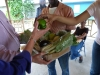 Bluefields Organic Vegetables