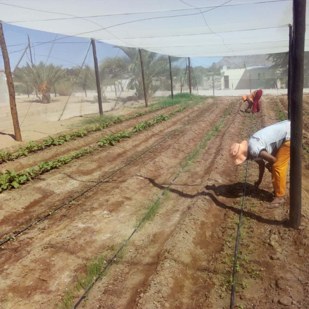 Shade net garden
