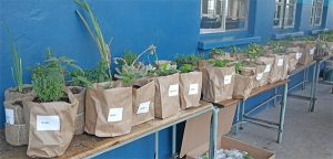 herbs-for-sale-small