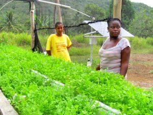 jamaica-aquaponics